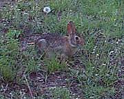 blog_rabbit_1a
